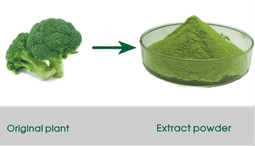 broccoli_powder_extract
