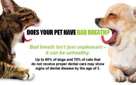 pets dental health