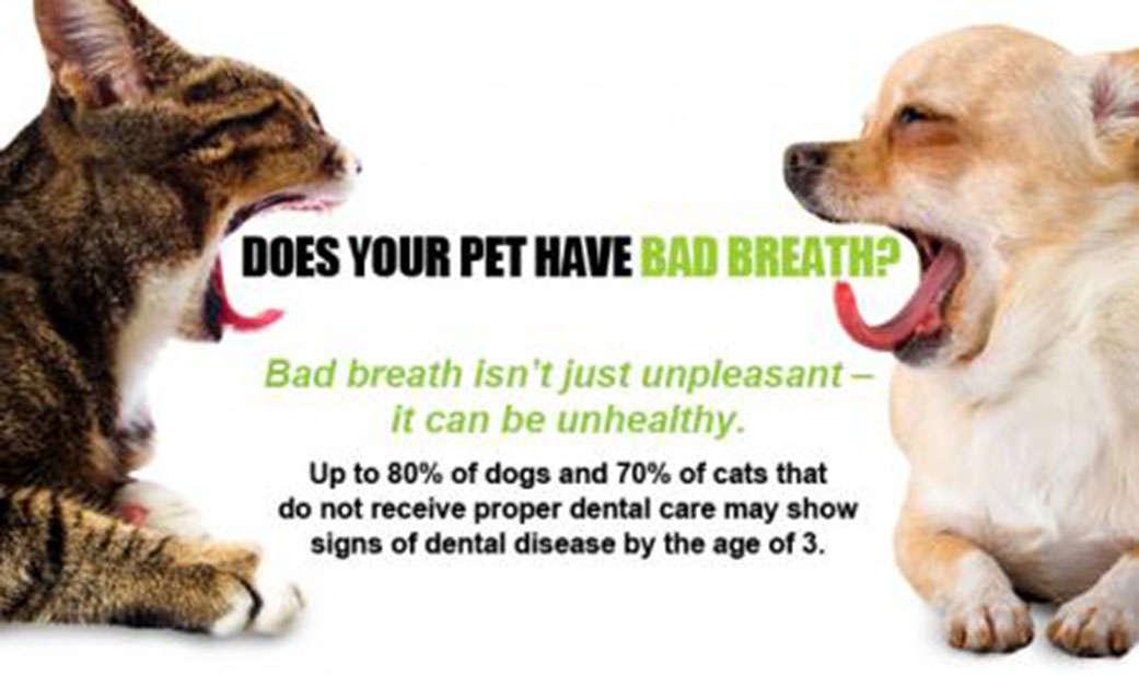 pets dental health