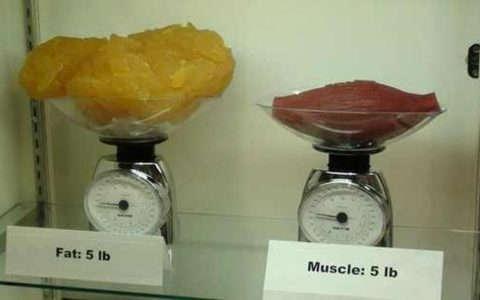 تنشيف العضلات و اذابة الدهون