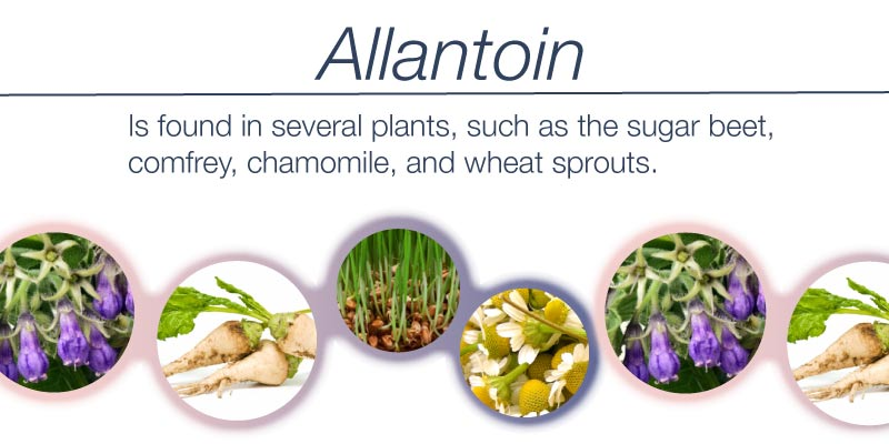 Allantoin ingredients of skin whteining cream for face